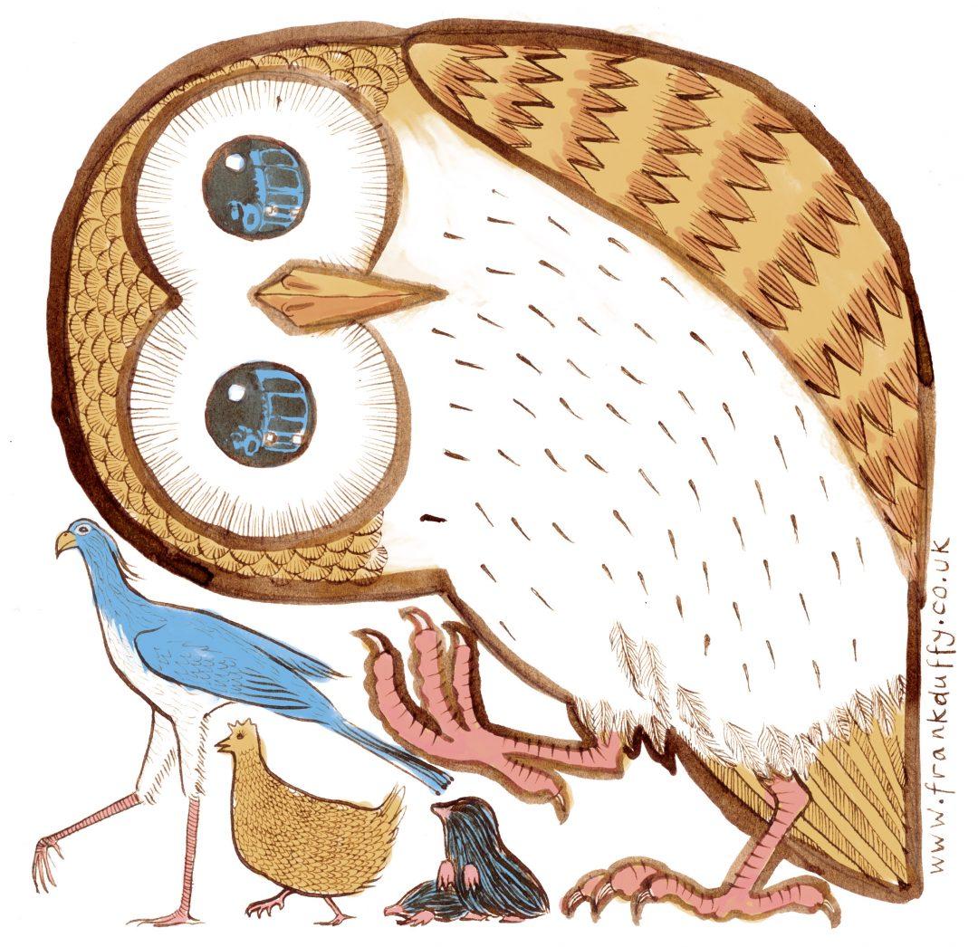 Owl illustration for book