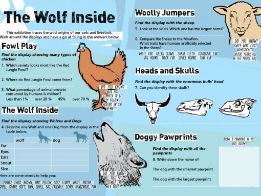 Wolf Inside interpretation sheet for National Museum Cardiff
